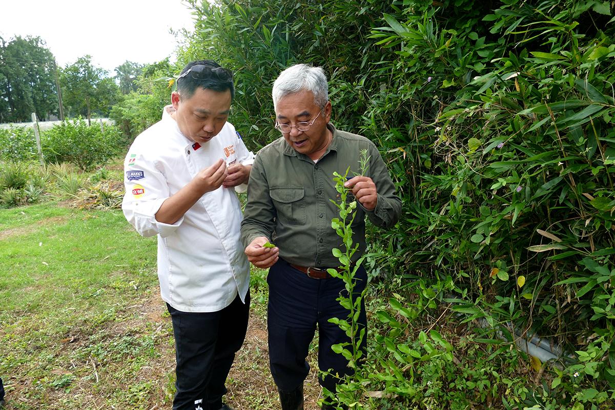 雕之森樹屋餐廳行政主廚劉恆宏(阿宏師)(左)從「產地到餐桌」尋訪在地食材。