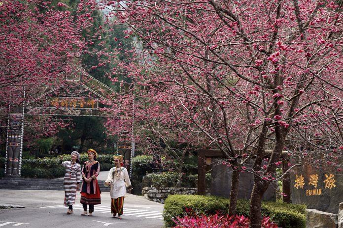 九族櫻花祭是台灣具吸引力、持續最久的賞櫻活動,每年都吸引非常多的遊客前來賞花。