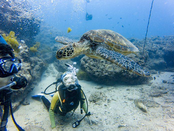 小琉球水啦PADI潛水訓練 體驗「與龜共游」的療癒感