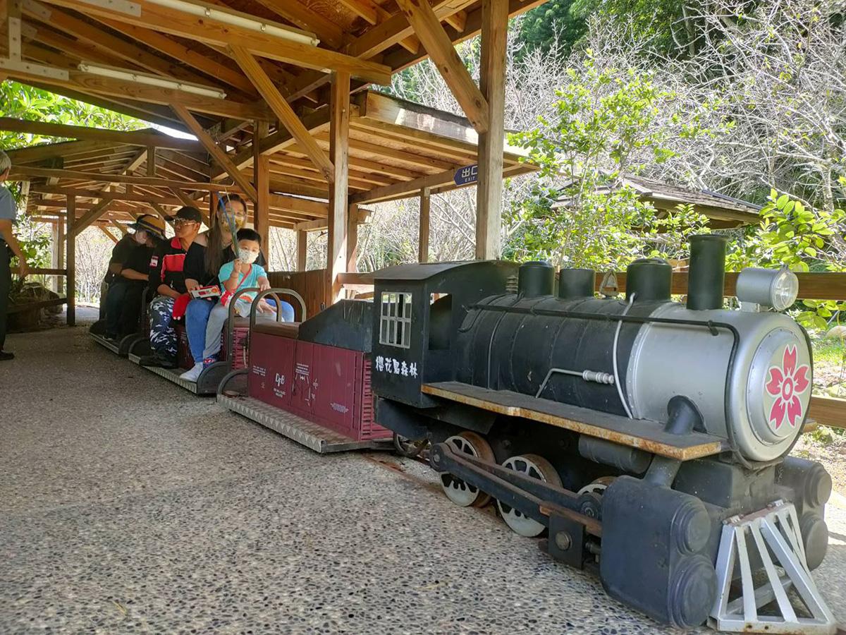 罕見的「八比一比例火車」供遊客乘坐體驗,到櫻花鳥森林一遊,千萬不要錯過坐上火車,給自己一個美照。