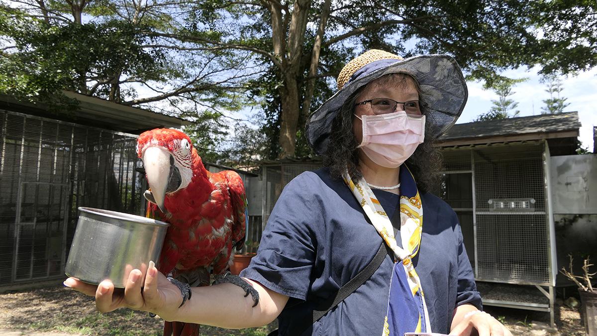 「金剛鸚鵡翱翔秀」上午11時11分將會準時呈現